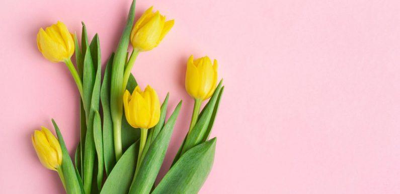 5 Tricks, die Tulpen länger frisch halten