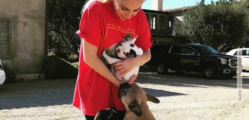 Lady Gagas Hunde entführt: Polizei schnappt Verdächtige