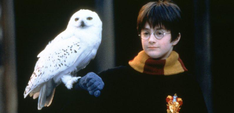 """Zum 20. Jubiläum: Zwei neue """"Harry Potter""""-Formate geplant!"""