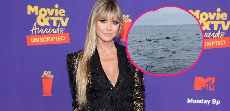 Delfin-Watching: So verbrachte Heidi Klum ihren Geburtstag