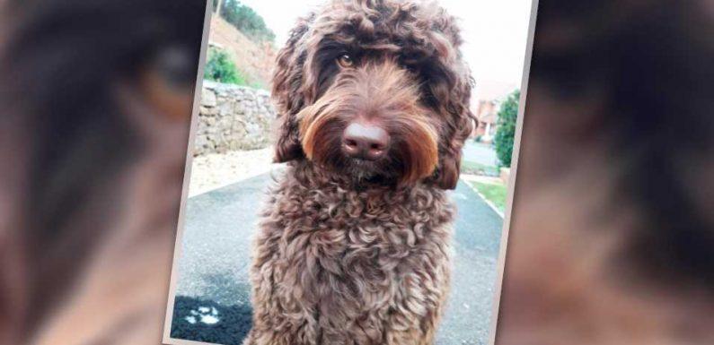 Flauschiger Retter: Therapiehund Digby rettet Frau vor Suizid