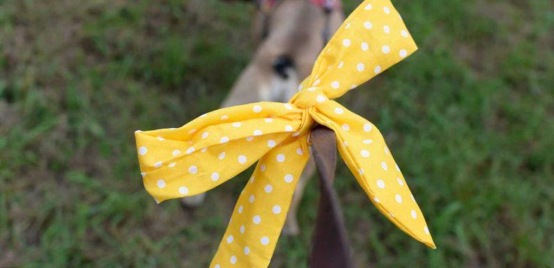 Hundehalsband oder Leine mit gelber Schleife? Das bedeutet das Merkmal!