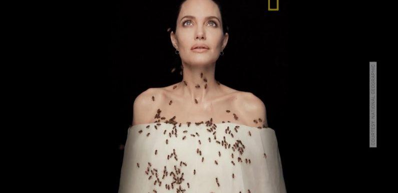 Biene im Intimbereich? Angelina Jolie setzt sich für Bienen ein und beweist Mut